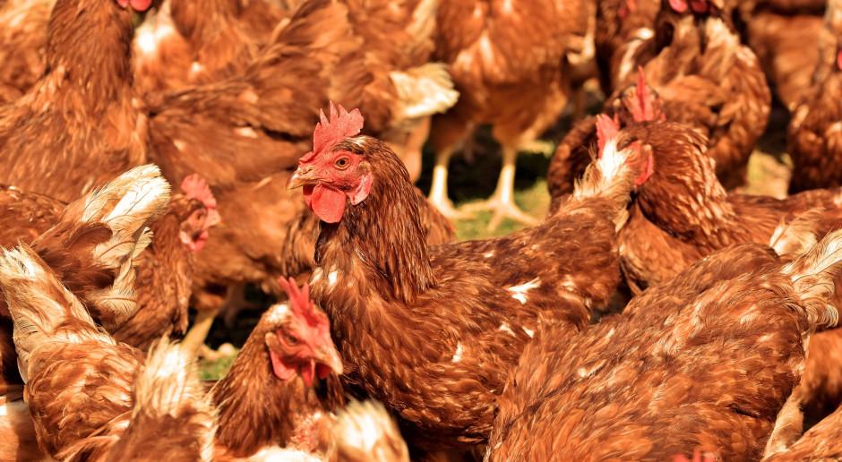 ARiMR: wnioski o wsparcie dla gospodarstw dotkniętych ptasią grypą - do 8 lipca