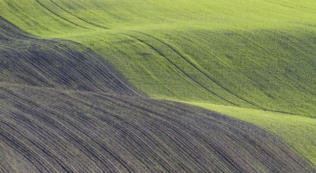 Rosja: Siew roślin jarych przeprowadzono na 32,1 mln ha