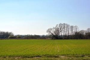 Na Ukrainie wykonano zasiewy roślin jarych na 6,6 mln ha