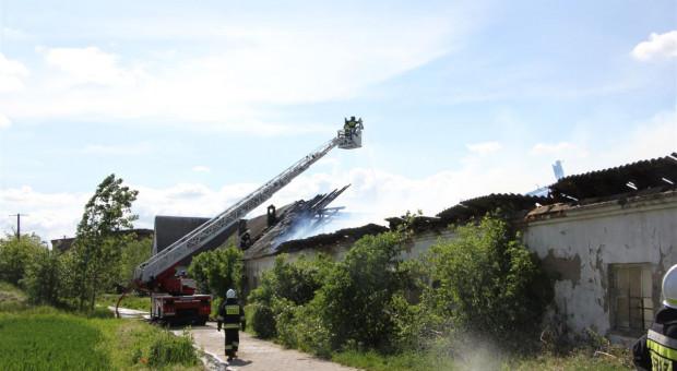 Pożar opuszczonej tuczarni pod Lesznem [zdjęcia]