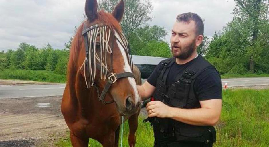 Małopolscy policjanci zaopiekowali się kasztanką biegającą po dk 44