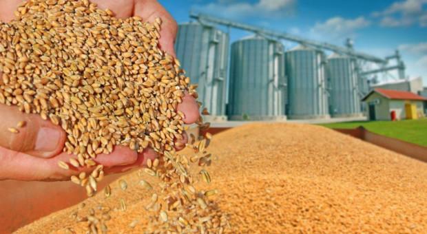 Ceny zbóż spadają – pszenica konsumpcyjna nawet po 700 zł/t