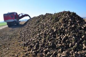 Südzucker nie sprzeda cukrowni francuskim plantatorom