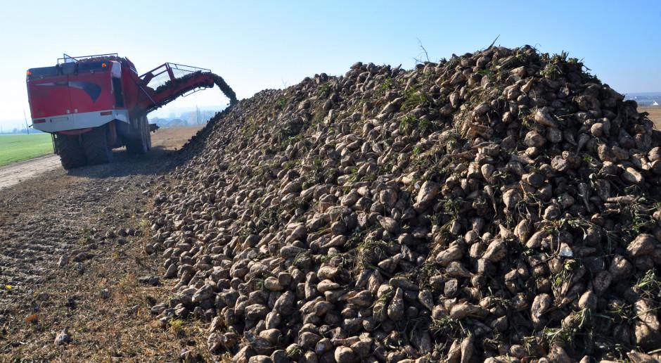 Ardanowski: musimy szukać sposobów uratowania produkcji buraków cukrowych w Europie