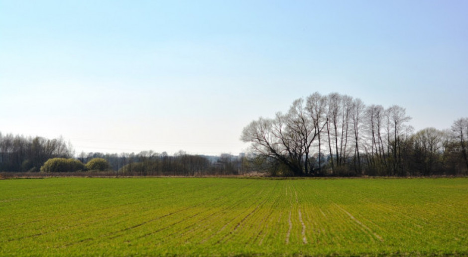 Rosja: Siew roślin jarych przeprowadzono na 39,3 mln ha