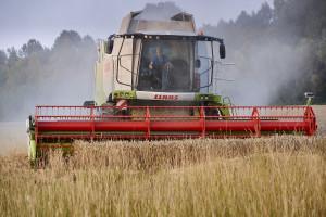 Do 2035 r. Rosja chce produkować rocznie prawie 150 mln ton zbóż