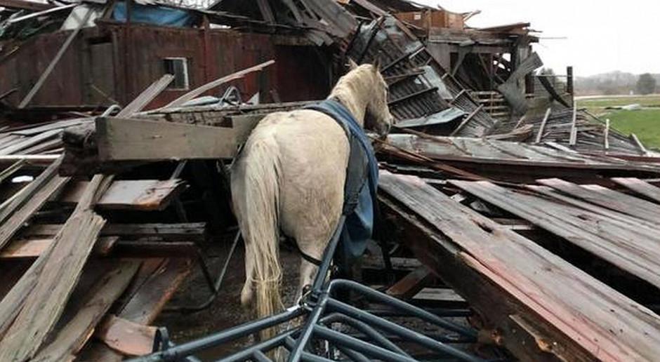 Koń cudem przeżył tornado