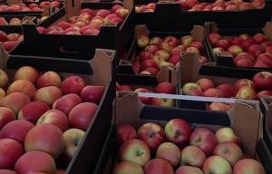 W ciężarówkach znajdowały się prawie 104 tony jabłek. Owoce zostały zniszczone