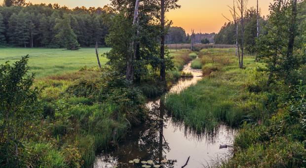 Ekolodzy: działania LP zaszkodzą Puszczy Białowieskiej; Lasy - są zgodne z rekomendacjami UNESCO