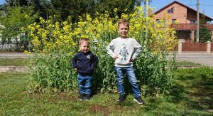 Tymek i Marcuś przy swoim polu rzepaku, fot.tk