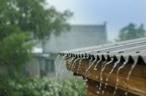 Co właściciel nieruchomości może zrobić, aby zwiększyć retencję wody? Foto. Shutterstock