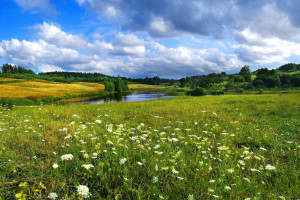 Rolnicy apelują: nie zmuszajcie nas do produkcji ekologicznej!