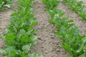 ADEA – sojusz na rzecz obrony europejskiego rolnictwa