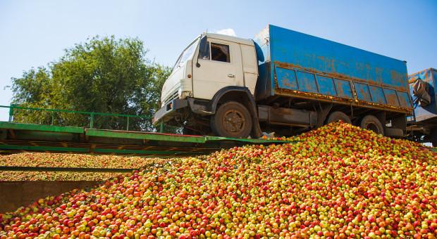 Spadają ceny jabłek przemysłowych - czy powtórzy się ubiegłoroczny scenariusz?