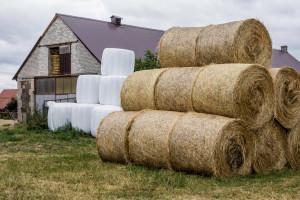 GUS: ceny towarowej produkcji rolniczej w 2018 r. spadły o 0,6 proc. rdr