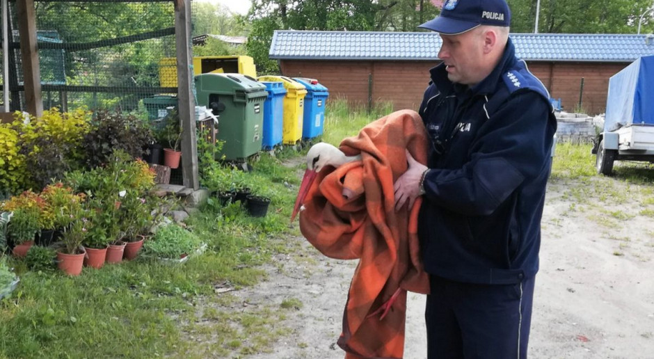 Policjanci pomogli rannemu bocianowi