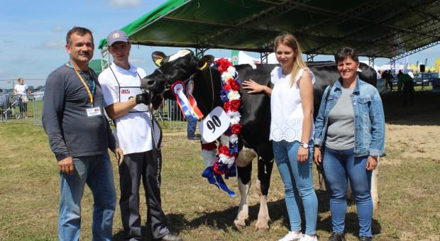 Za nami pierwsza wystawa bydła mlecznego na Mazowszu [Zdjęcia]