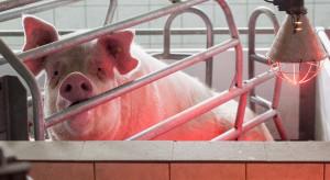 Milion podpisów za rezygnacją z klatek w produkcji zwierzęcej