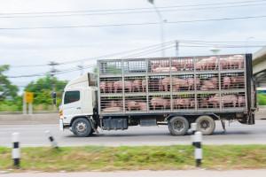 Bioasekuracja znów uszczelniona