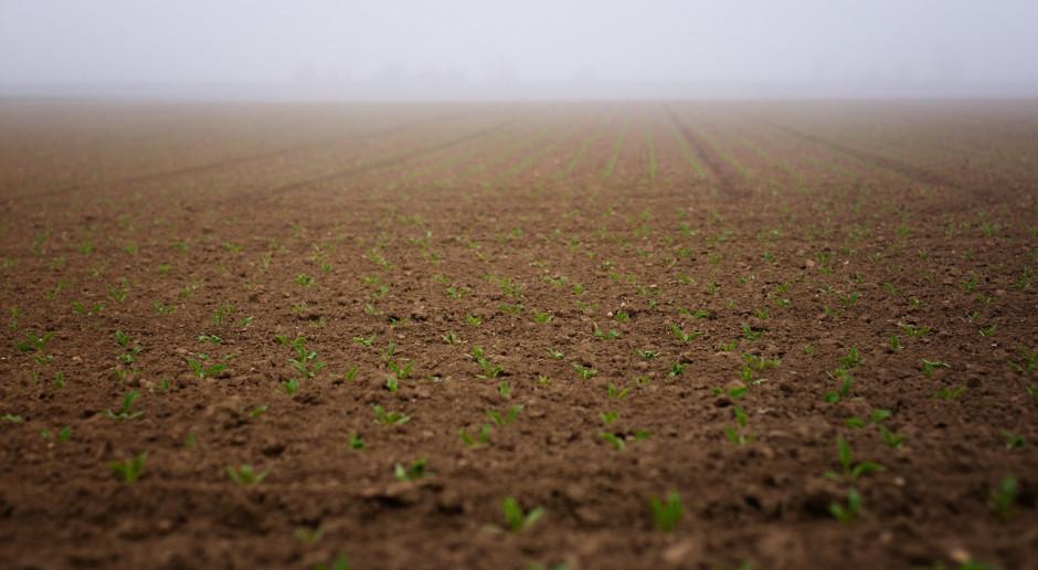 Rosja: Siew roślin jarych przeprowadzono na 48,5 mln ha