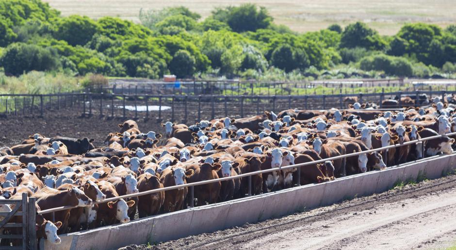 Przypadek BSE w Brazylii: Wstrzymano eksport wołowiny do Chin