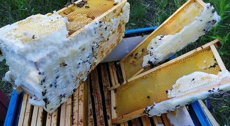 Ktoś wpuścił piankę montażową do uli i zabił wszystkie pszczoły