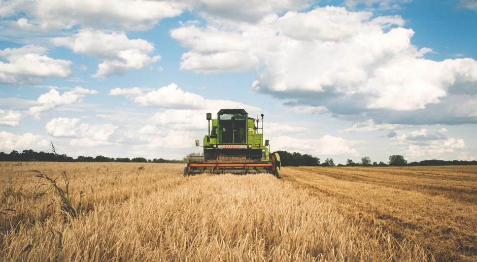 DRV podnosi prognozę zbiorów zboża w Niemczech