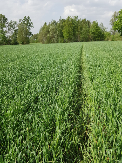 Pierwsze kroki w nowym systemie uprawy mogą być problematyczne, ale z czasem presja agrofagów i plony roślin normują się