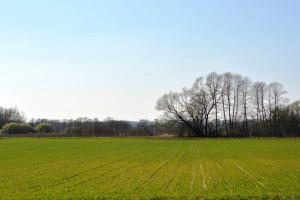 Rosja: Siew roślin jarych przeprowadzono na 49,3 mln ha