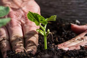 Francja: Co dziesiąte gospodarstwo działa ekologicznie