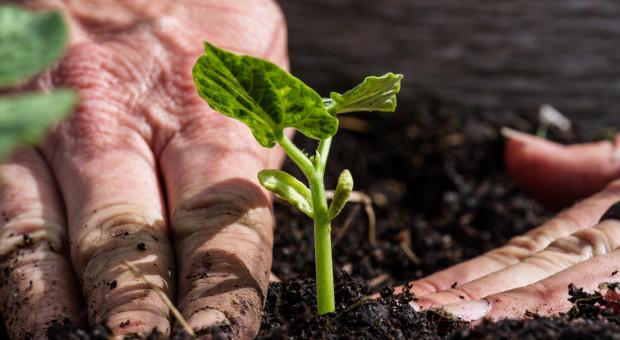 Rząd we wtorek o ochronie roślin przed agrofagami