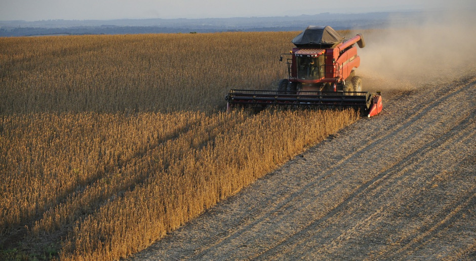 USDA: Mniejsze prognozy światowej produkcji soi w sezonie 2019/2020