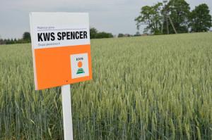 Demo Farma KWS Wybranowo. KWS Spencer to jakościowa odmiana chlebowa (grupa A), która została wpisana do Krajowego Rejestru w  2017 r.; Fot. Katarzyna Szulc