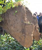 Tak wygląda profil glebowy wydobyty przy pomocy ładowarki teleskopowej. Na pierwszym planie widać – jak mówi Philippe Pastoureau – najlepszych pracowników na świecie, czyli dżdżownice, o które rolnik stara się dbać jak najlepiej, fot. M. Wołosowicz