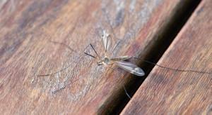 Rząd pomoże samorządom w walce z komarami