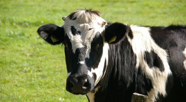 Ubój z konieczności będzie odnotowany w rejestrze zwierząt