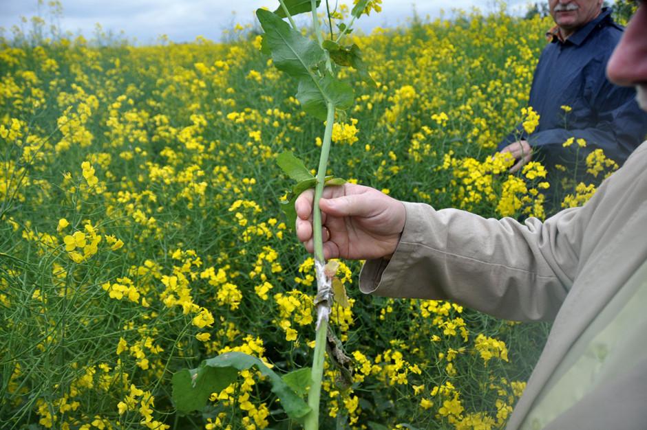 Rośnie zainteresowanie biopreparatami w ochronie roślin