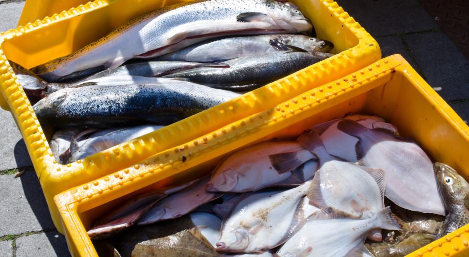 Wzrost eksportu ryb. Najwięcej pod względem wartości sprzedaliśmy łososi