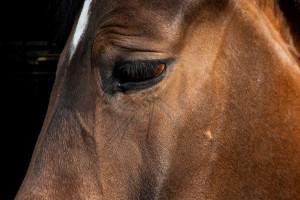 Fogiel: prezes PiS przeznaczył13 emeryturę na wykup koni z rzeźni, a dodatkowo wsparł osoby z autyzmem