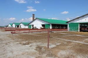 Obory na krowy mleczne w Tarnogrodzie,  fot. kh