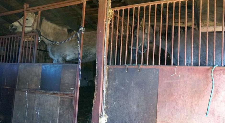 Wyrok za złe traktowanie koni dla instruktorki jazdy konnej