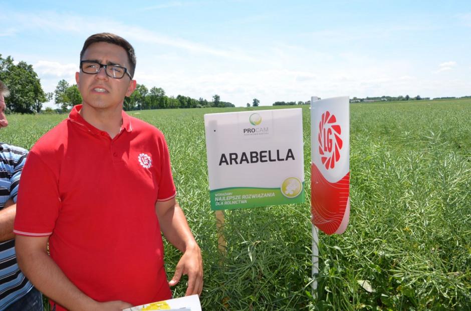 Arabella - jedna z odmian firmy Limagrain, fot. M. Tyszka