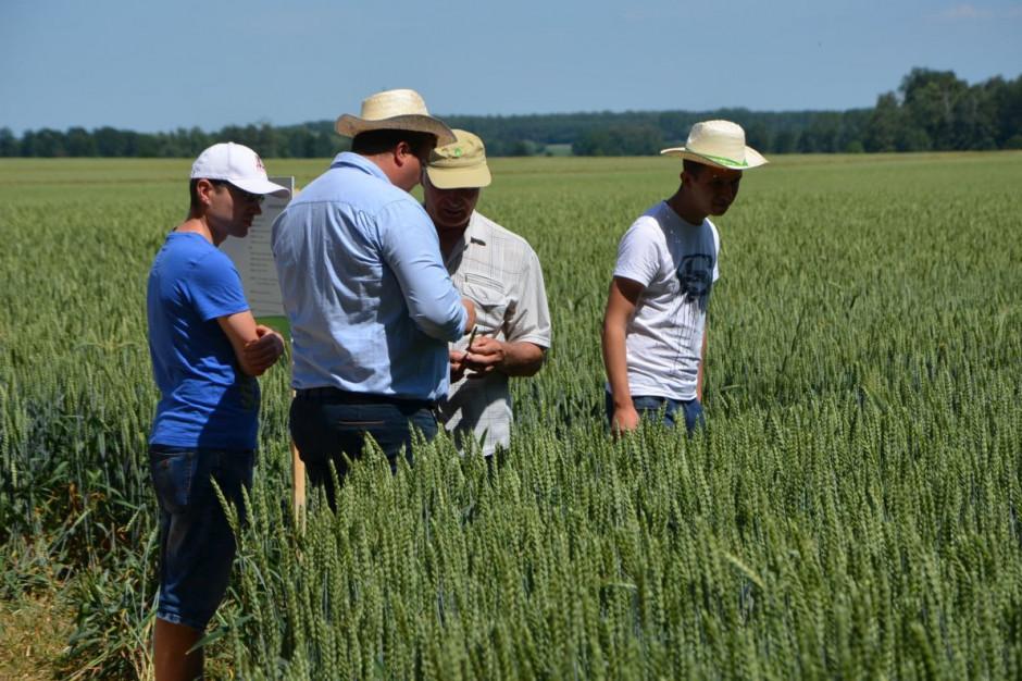 Lustracja odmian zbóż, fot. M. Tyszka