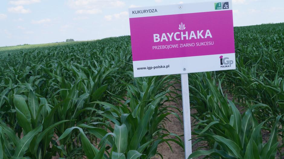 Baychaka