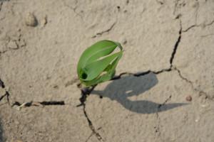 IUNG PIB: Susza rolnicza na terenie 10 województw - nowy raport