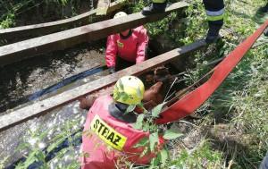 Pod Braniewem strażacy wyciągali z szamba cielę