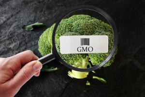 Resort rolnictwa ma projekty znaków graficznych dla produktów bez GMO