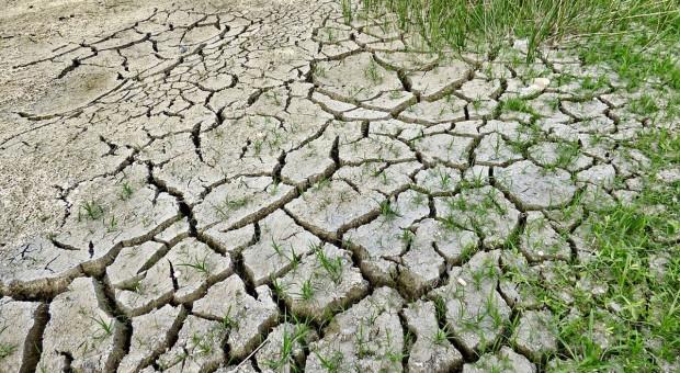 Na terenie Polski utrzymuje się susza rolnicza