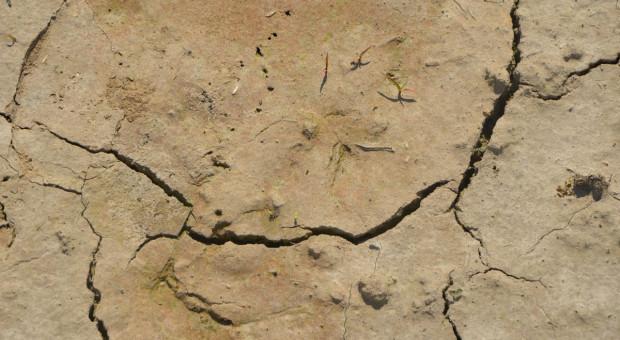 Polska ma coraz większy problem z suszami - czy można temu przeciwdziałać?