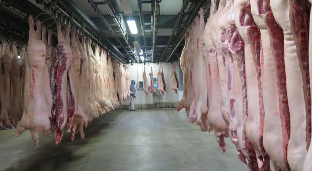 BPG: Polska jest największym odbiorcą naszej wieprzowiny
